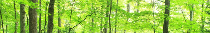 cropped-sentier-grand6.png